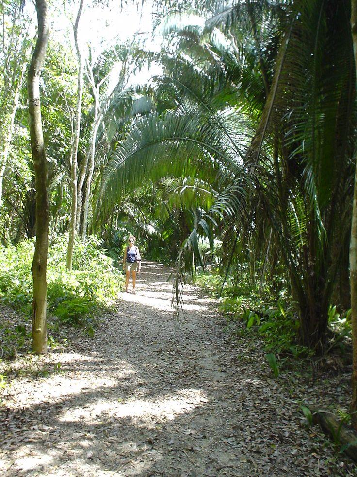 walking through the jungle at Kohunleach Maya temple site