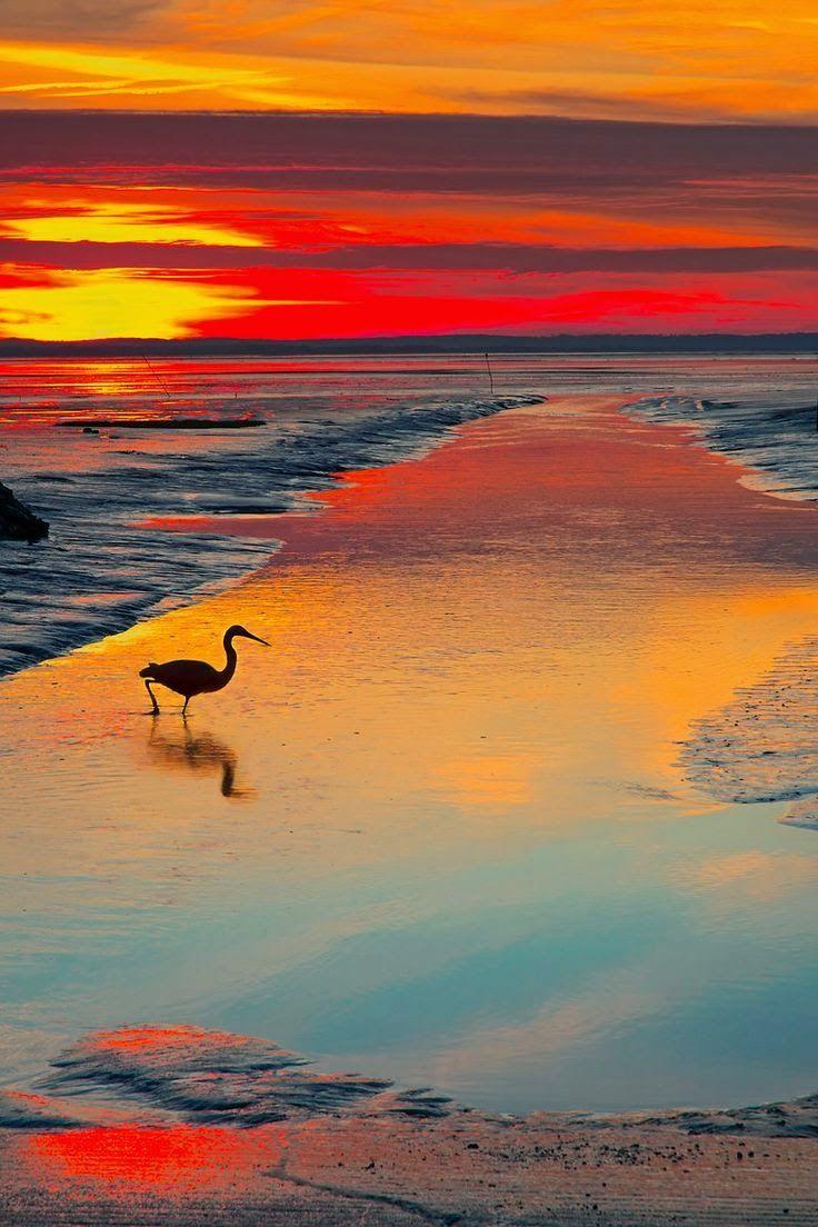 Bird at sunset, Port d'Audenge - France