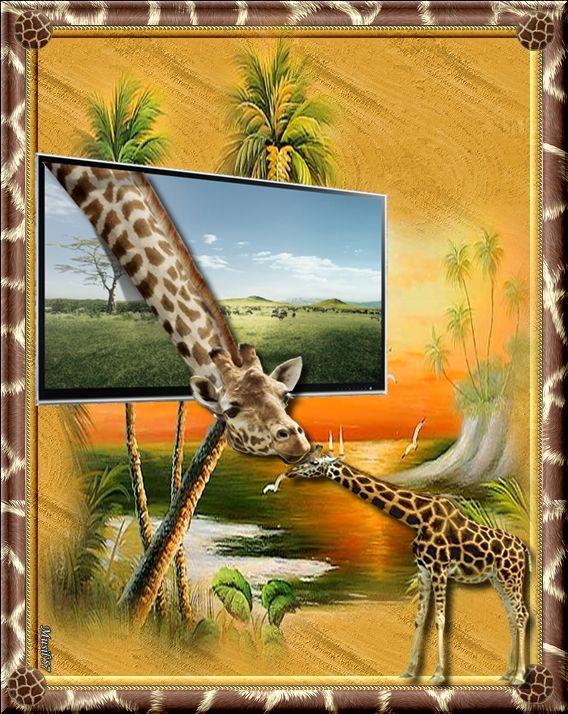 zsiráfok
