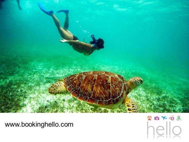 VIAJES EN PAREJA. Akumal es uno de los lugares en Cancún que alberga tres especies de tortuga carey. Hacer snorkeling en esta zona, amplía tus oportunidades para apreciarlas en los arrecifes y disfrutar de una experiencia maravillosa, contemplando los paisajes submarinos de este lugar. En Booking Hello te invitamos a adquirir alguno de nuestros packs all inclusive, para viajar con tu pareja a este fantástico destino. #escapatealcaribe