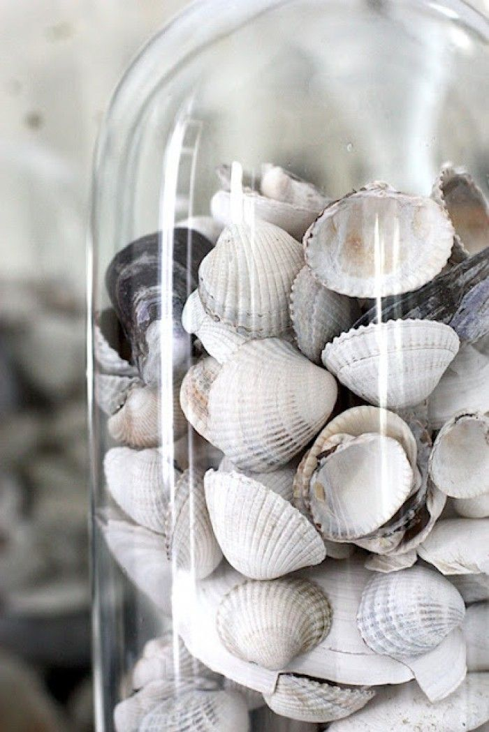 Explore These Beautifully Chic Coastal Cloche Decor Ideas For Your Home Home Living Seashells