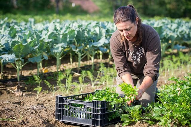 10 Things to Know Before Starting a Hobby Farm
