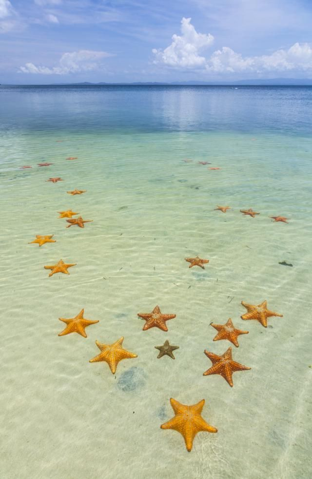 Starfish Beach, with many starfish in the shallow sea (Asteroidea) Colon Island, Bocas del Toro Archipelago, Bocas del Toro Province, Panama, - Juan Carlos Munoz/Nature Picture Library/Getty Images