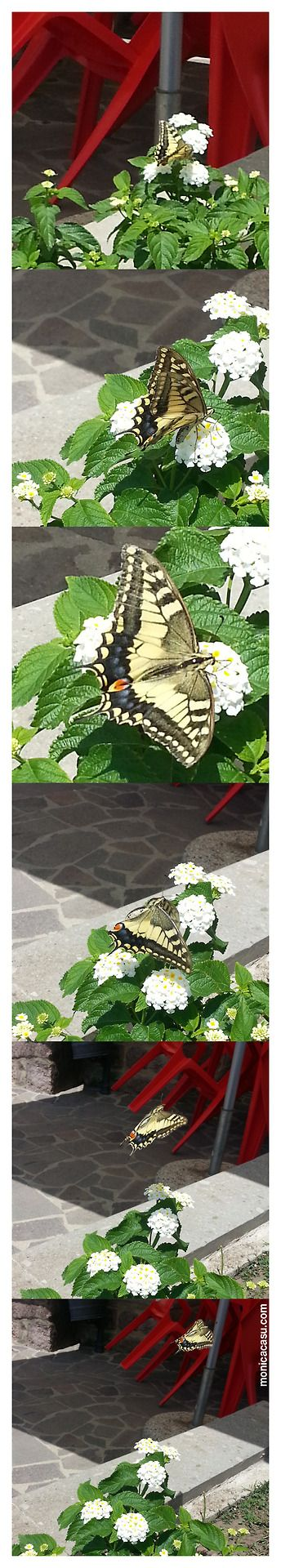 YELLOW BUTTERFLY PHOTOSHOOT. #monicacasu @Monica Casu #butterfly