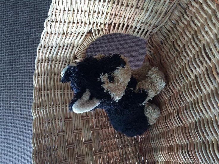 Found on 24 Oct. 2015 @ Mackie park brighton. found on Friday in Mackie park. Looks very loved! Visit: https://whiteboomerang.com/lostteddy/msg/sazdo5 (Posted by Susie on 24 Oct. 2015)
