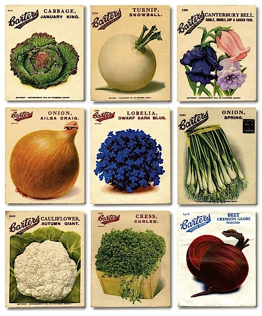 Get set for the season ahead with the most exciting and worthwhile seeds. Alys Fowler reviews her favourite catalogues.
