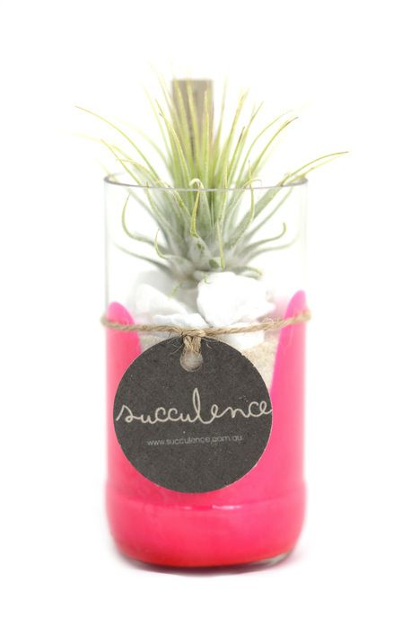 Bottle Garden - Small Neon Pink by Succulence