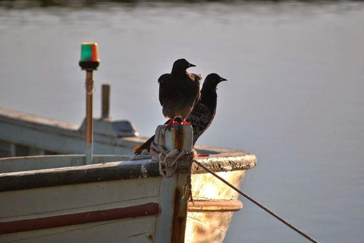 """εν πλω σημειώσεις  φωτογραφίας : """"θαλασσινές ματιές του Οκτώβρη"""" ,Μιχάλης Ματζαβίνο..."""