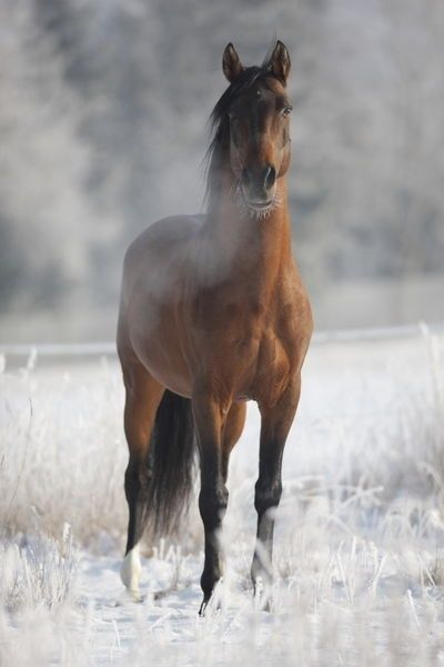 Out in the Winter Pasture | winter wonder