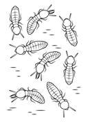 Gräshoppa Målarbilder. Gratis utskrivningsbara bilder med varierande teman som du kan skriva ut och färglägga.