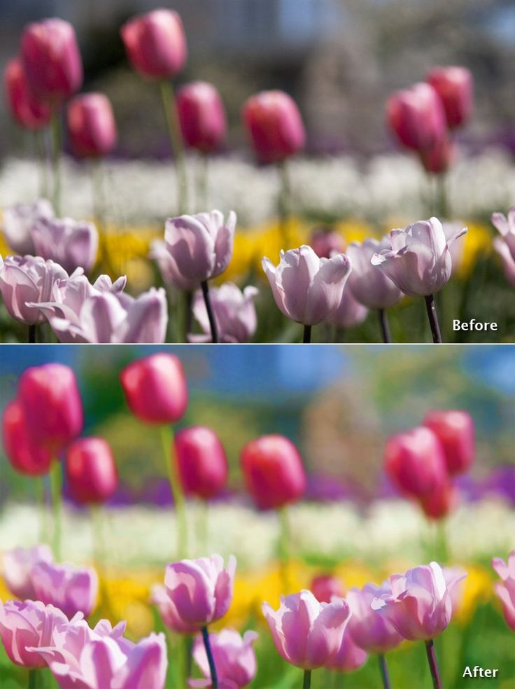 Turn your photo into works of art with Topaz Simplify