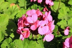 Santé: 5 remèdes naturels contre la bronchite - Frawsy www.frawsy.com