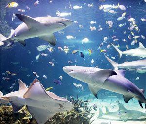 17 Images About Sea Life Aquarium Carlsbad On Pinterest