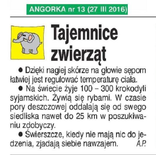 Sępy_krokodyle syjamskie_świerszcze