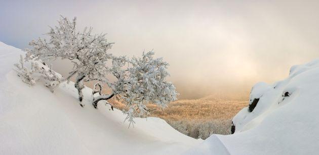 Carpathian winter © Tibor Rendek