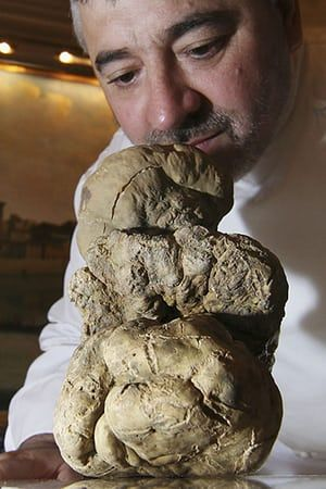 Giant vegetables: A 1.5 Kg Alba white truffle is presented by Chef Umberto Bombana