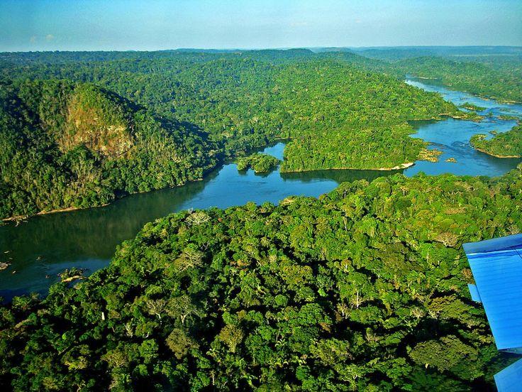 Resultado de imagem para Floresta de Reserva amazonica