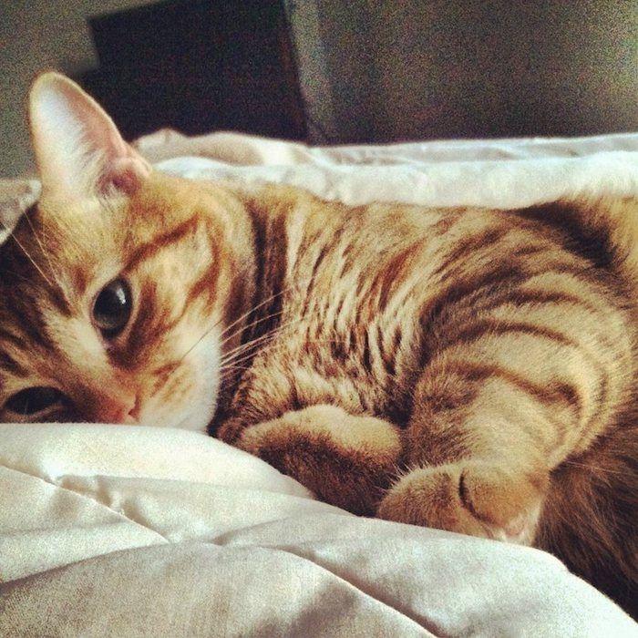 ein niedliches Kätzchen im Bett, es ist bereit aufgewacht und sieht verwirrt aus   süße Bilder