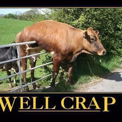 LOLFence, Well Crap, Laugh, Funny Pictures, Funny Stuff, Humor, Funny Animal, Cows, The Moon