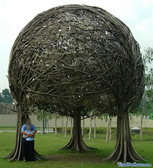 Three trees intertwined