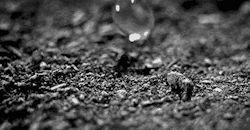 gif nero e natura animata goccioline gif ISM goccia d'acqua bianche