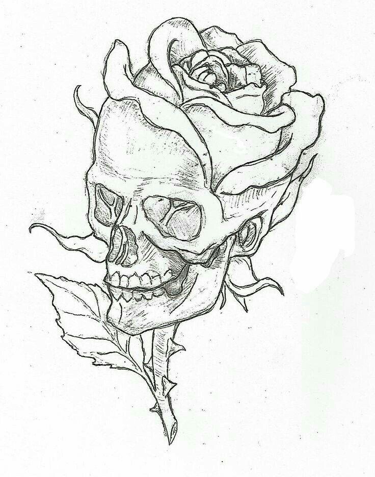 Ideas Easy Skull Drawings Animal Drawing