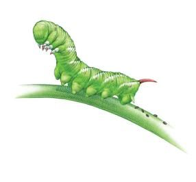 Organic pest control.... List of some of the top pests of a garden and ideas of how to control them organically....