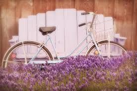 Výsledok vyhľadávania obrázkov pre dopyt lavender vintage