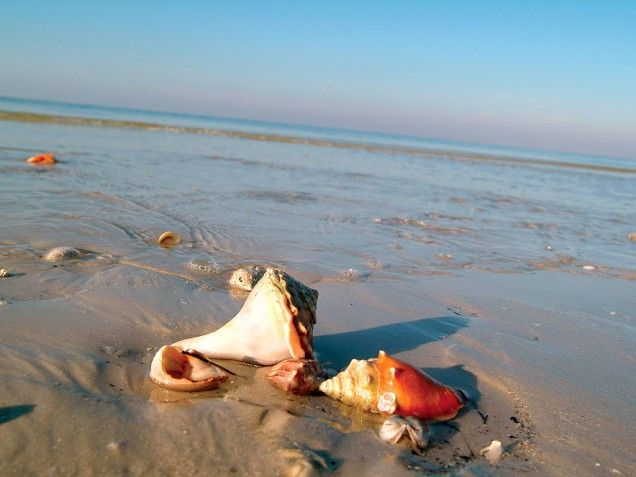 Sanibel & Captiva Islands Southwest Florida- water is shallow forever, so it's a great place for little guys! What to do: Grab a bucket and start shell hunting, Watch for dolphins right off shore, or see them close up on a Captiva nature cruise. Also visit Sanibel's J. N. Ding Darling National Wildlife Refuge, home to alligators, manatees and roseate spoonbills.