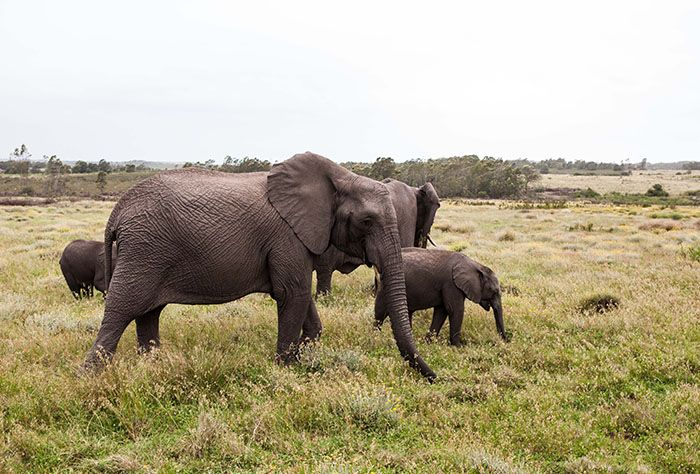 Gondwana Private Game Reserve, Mossel Bay, South Africa