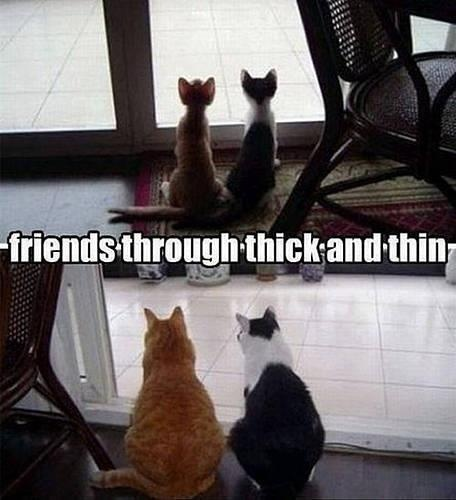 Thru thin and thick: Cats, Animals, Friends, Sweet, Stuff, Funny, Kitty