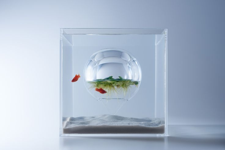 Haruka Misawa's Waterscape aquariums make use of atmospheric and water pressure to support submerged inverted glass domes to provide underwater air pockets or, as in one case, to raise a water-filled sphere above the water line.