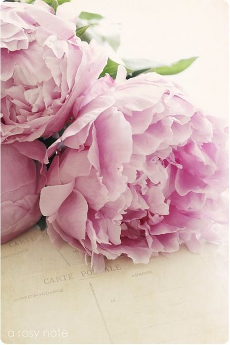 ...peony are a beautiful flower for weddings