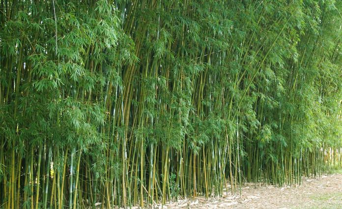 Bambus Entfernen Muhsam Aber Nicht Aussichtslos Bambus Garten Bambus Garten