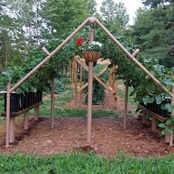 Free plans and pictures of PVC pipe projects. Garden projects and LOTS of other ideas. A must see!