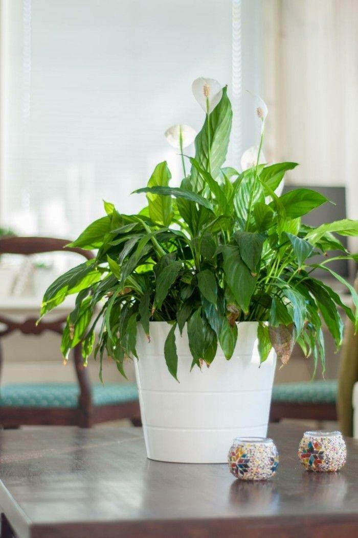 7 Pflegeleichte Zimmerpflanzen Die Wenig Licht Brauchen Blumen