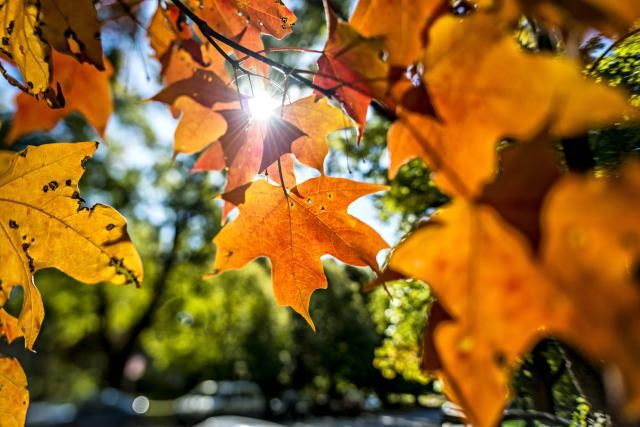 """Discover why we have fall, fall weather patterns, and upcoming fall equinox dates. Plus, why calling it """"fall"""" or """"autumn"""" may give away where you're from."""