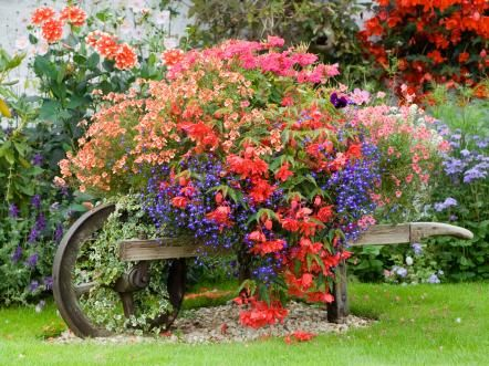 This wheelbarrow almost looks as if it got mistakenly left out in the yard and the flowers took over and made it their home.