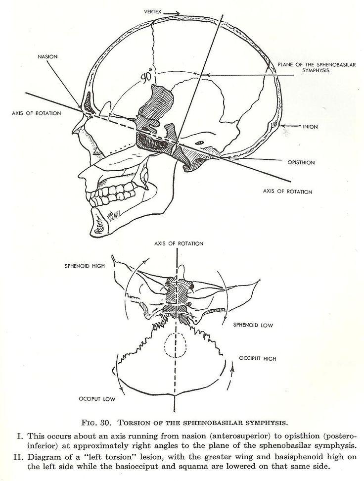 409 best Anatomie images on Pinterest | Anatomy, Human anatomy and ...