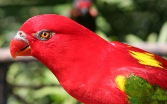 Best 25+ Rainforest birds ideas on Pinterest | Pretty ...