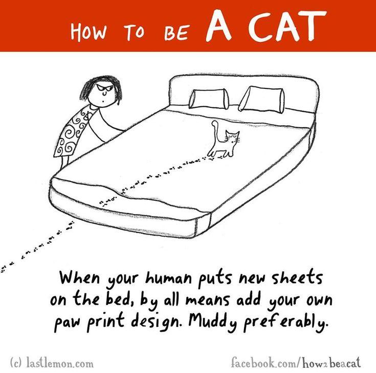 """""""Quando il tuo umano mette le lenzuola pulite sul letto, lascia le impronte delle tue zampe sul letto. Preferibilmente sporche di fango."""""""