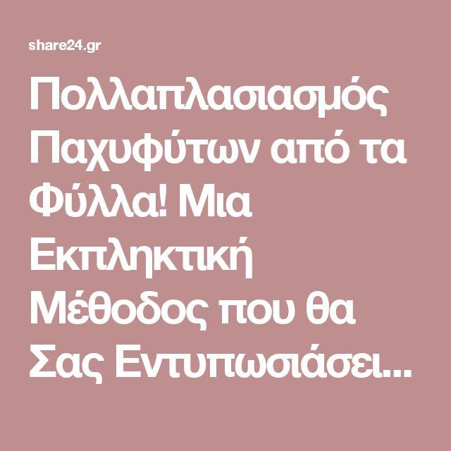 Πολλαπλασιασμός Παχυφύτων από τα Φύλλα! Μια Εκπληκτική Μέθοδος που θα Σας Εντυπωσιάσει! - share24.gr