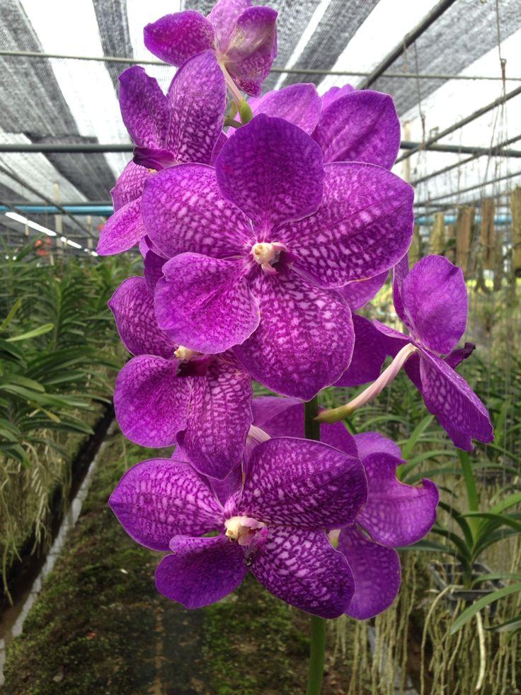 3434 Best Garden Orchid S Orchide 233 N Images On Pinterest