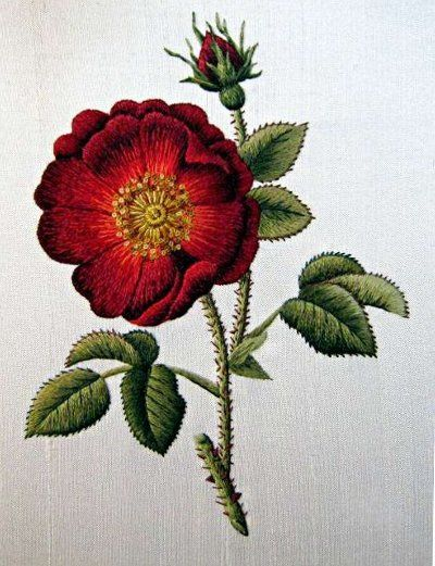 View topic - Needle Painting: French Rose (Trish Burr) – Needle'nThread.com