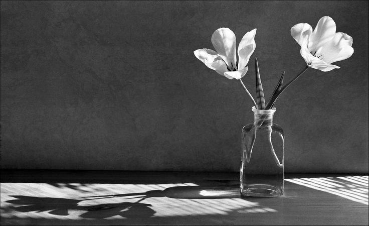 Still Life Charlie Francis Photography Black And White Pinterest Still Life Shadows And