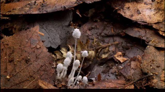 Växternas hemliga liv: Dolda egenskaper