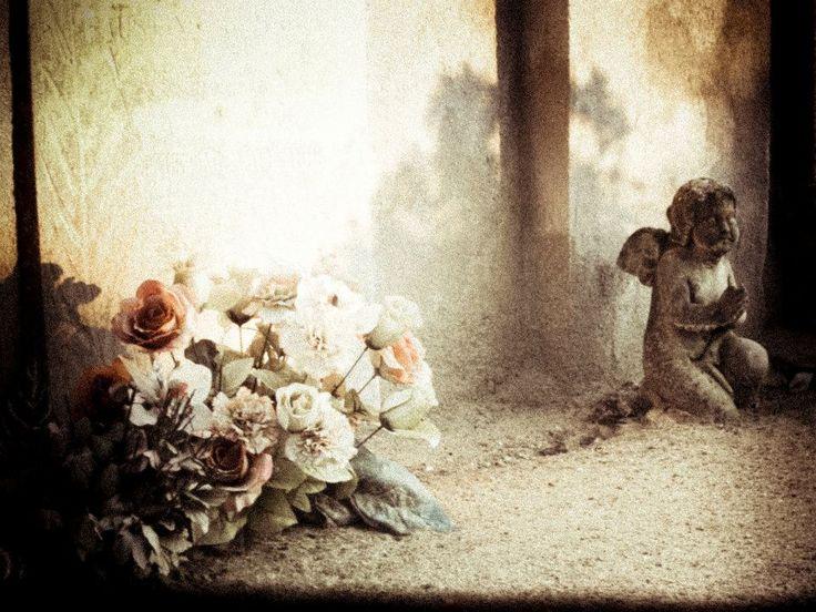 Rosa e fiori. Pic: Stefania Ciocca #Lomellina #sacro #storia #turismo