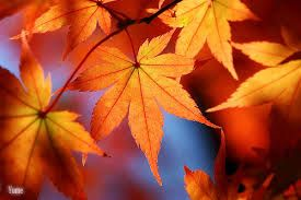 Image result for leaves fall