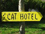 The Valley Cat Hotel - Top Quality Cat Boarding Kennel, Annapolis Valley, NS,CA