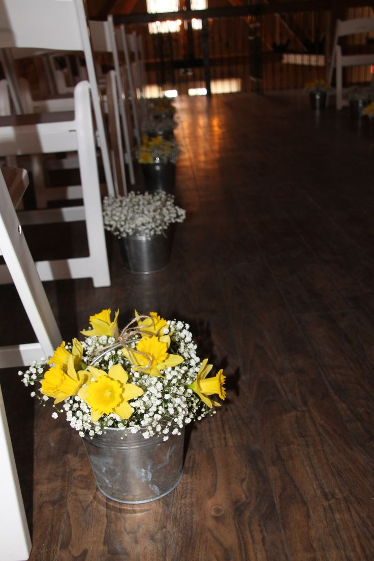 Daffodils & baby breath [gypsophila] in tin buckets to decorate ceremony aisle at Rustic Manor on Hwy 83, Delafield. Created by Judith Marie at Fox Bros Floral, Hartland, Wi